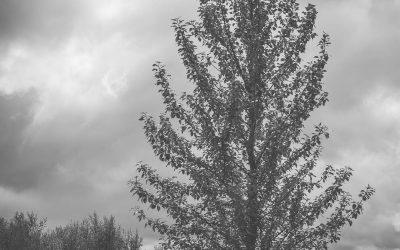 Fyrir og eftir – svarthvít vinnsla